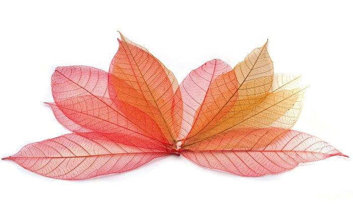 feuilles eurovert